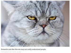 Cats: What They're Really Thinking